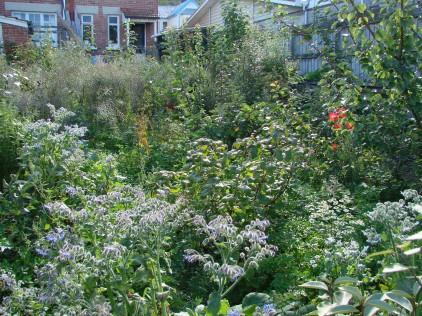 Mid garden.