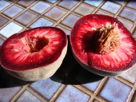 Late April Blackboy peaches. Freestone, peach leaf curl resistant, delicious.