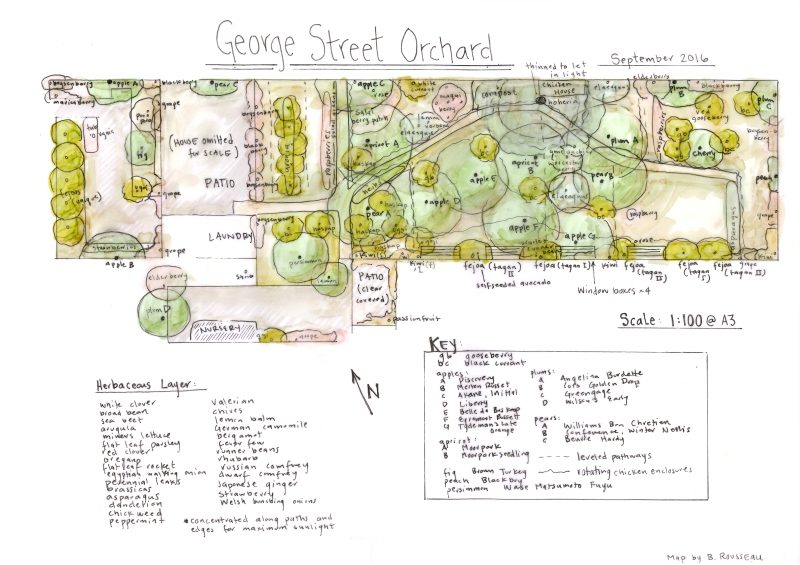 george-st-orchard-300dpi