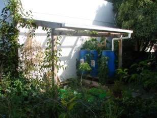 This corrugated perspex lean to was built as a dry social space, a structure for hardy kiwi and passionfruit vines to grow under and a propagation space. 3x250 litre barrels (food grade) are supported by a small raised bed growing the passionfruit vine and tomatoes.
