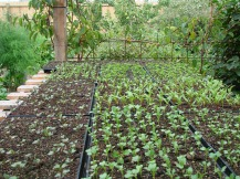 Seedlings for Taste Nature Gardens