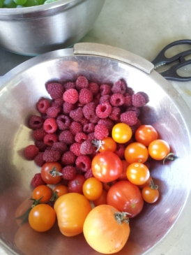 Autumn raspberries and tomatoes