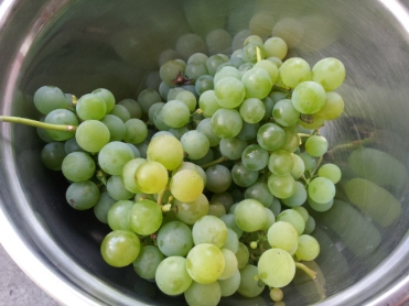 'Niagara' grapes
