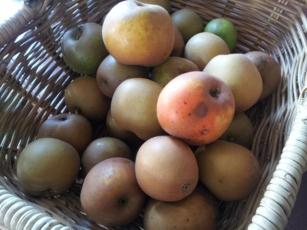 'Egremont Russet' apple