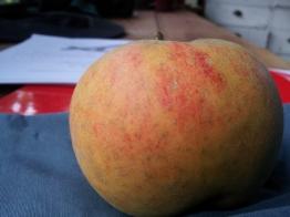 'Orleans Reinette' apple