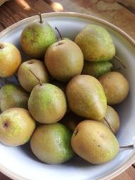 Winter Nellis pears