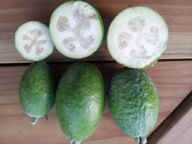Unique, Tagan and Kakariki feijoas