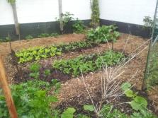 Mini market garden