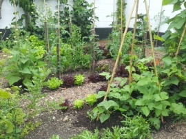 No dig mini market garden - spring salads harvested from middle rows within beds with tomatoes and beans added for summer and autumn #charles_dowding