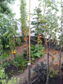 Home vege garden with fruit on walls