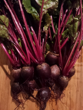 Thinned summer sown beets