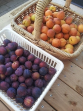 Angelina Burdett plums and Moorpark apricots